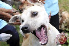 Pemkab Sukabumi antisipasi penyebaran virus rabies