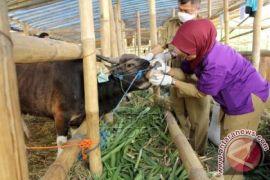 Dinkes Bogor berikan tips membeli hewan kurban