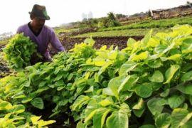 Kementan manfaatkan lahan tidur untuk perluas pertanian