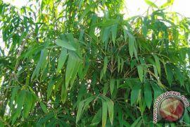 Sisi Citarum wilayah Karawang ditanami ribuan bambu