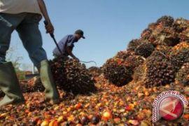 Dewan Penghasil Minyak Sawit Indonesia-Malaysia