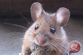Ada tikus makan uang kertas Rp18.000 dolar di ATM