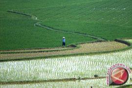 Purwakarta optimistis capai tanam padi 40.000 hektare