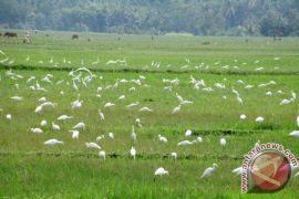 Ketika burung membawa warga desa miskin menuju kemakmuran