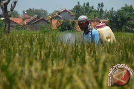 Produksi padi Karawang mencapai 1,2 juta ton