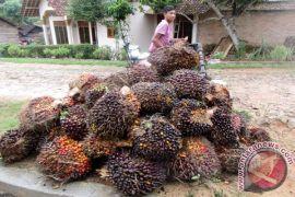 APCASI meminta bea ekspor cangkang sawit turun