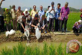 Presiden Jokowi Dukung Pengembangan Program Minapadi