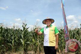 Lampung Mencapai Swasembada Padi dan Jagung Tahun 2017