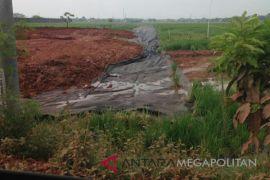 Tanaman padi Karawang mati diurug tanah merah
