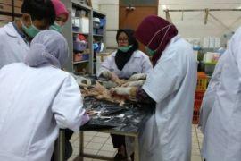 Para calon dokter hewan IPB ikuti pelatihan vaksin dan nekropsi pada ayam