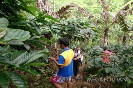 KTH Cibulao kembangkan agrowisata kampung kopi
