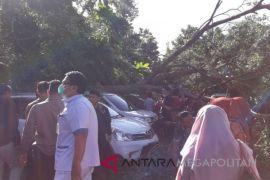 Wali Kota instruksikan DLH periksa kondisi pohon