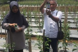 STPP Bogor gandeng asosiasi bisnis cabai Indonesia