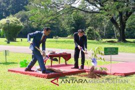 Ketika Presiden Jokowi dan PM Tiongkok menanam pohon kamper (Video)