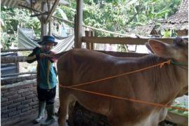 STPP Bogor bantu Upsus Siwab Lampung Tengah