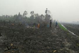 Kearifan lokal Dayak Ngaju dalam menyiapkan lahan patut ditiru