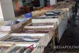 Hasil tangkapan ikan laut di Palabuhanratu anjlok