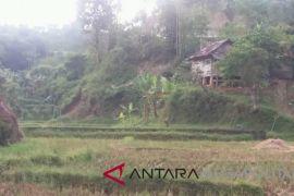 Pemkot Sukabumi pertahankan lahan pertanian produktif