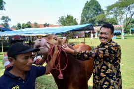 Bogor kesulitan dirikan bursa hewan kurban kecamatan