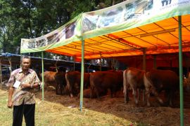 Bursa hewan kurban Bogor diminati peternak