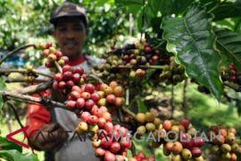 Dinas pertanian-Dinas pariwisata Bogor berkolaborasi promosikan kopi