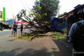 Pohon tumbang di Karawang hantam pengendara motor