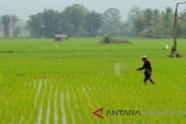 Data luas lahan pertanian Bekasi tidak sinkron