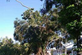 Pemkot Sukabumi berlakukan pohon diberi