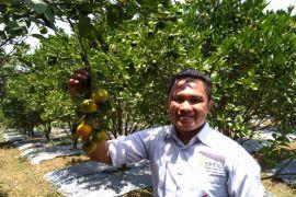 Alumni IPB kembangkan agrowisata jeruk Garut