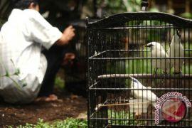 Polisi Tangkap pencuri burung di Karawang