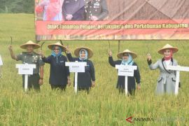 Program swasembada pangan Bogor capai 95,5 persen