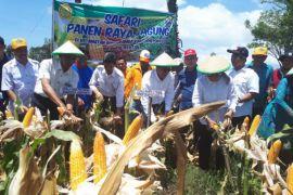 Balitbangtan: Provinsi Sulawesi Selatan panen jagung