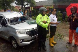 Tragis, seorang pengendara tewas tertimpa pohon tumbang