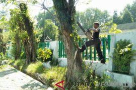 Purwakarta siapkan tim penebang pohon antisipasi pohon tumbang
