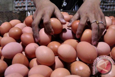 Anggota DPR sinyalir harga telur terkait pakan
