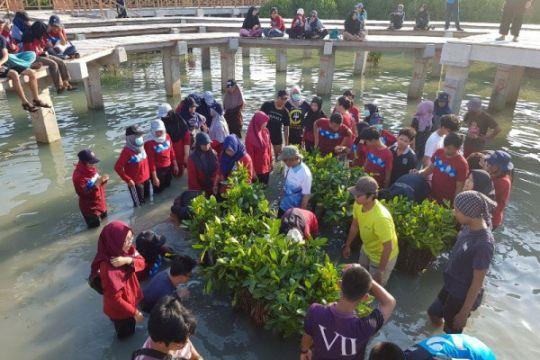 Mahasiswa MSP IPB tanam 1000 mangrove di Pulau Pramuka