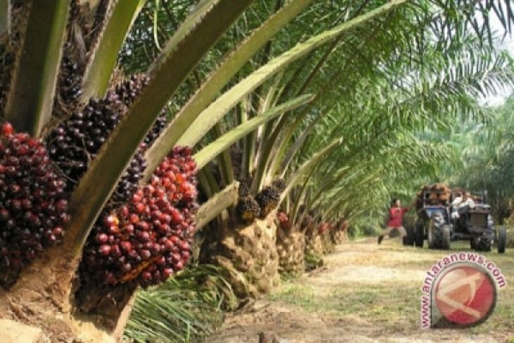 FAO-IFAD dukung Indonesia soal sawit