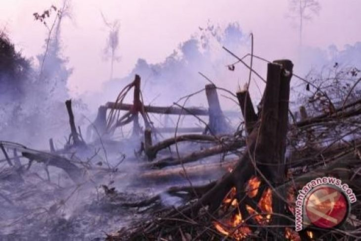 Waduh, 40 hektare hutan lindung Batam terbakar