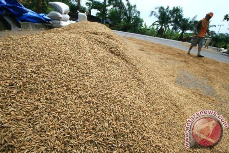 Pemkab imbau petani jual padi ke Bulog
