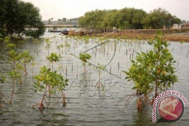 BPLHD Jabar Gandeng Ribuan Perusahaan Tanam Mangrove