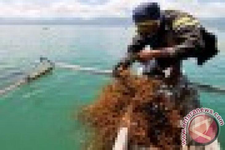 Potensi Rumput Laut Karawang Belum Digarap Optimal