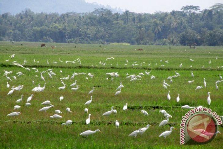 Ini dia, Suami-istri China-Indonesia bangun resor ekologi burung walet