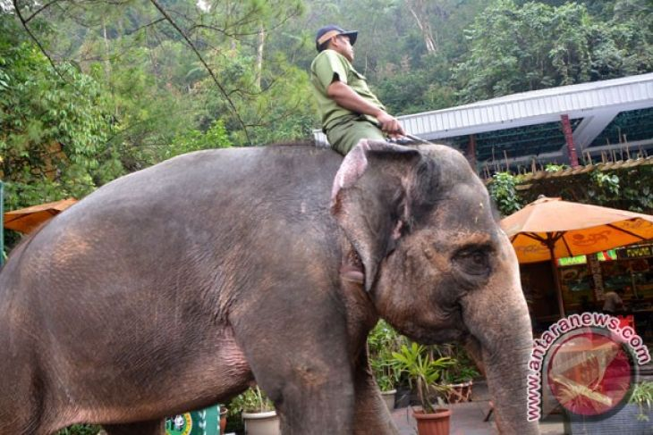 Dua Wisatawan Tewas Terinjak Gajah Di Zambia