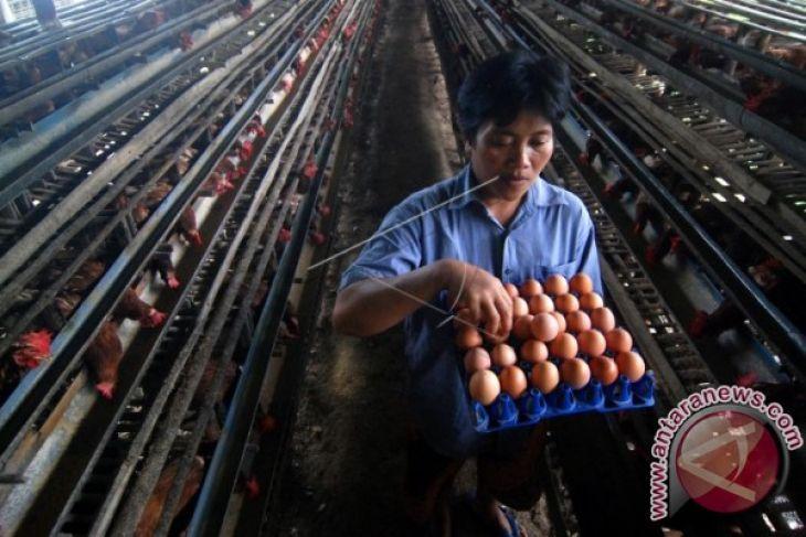 Harga telur ayam di Karawang merangkak naik