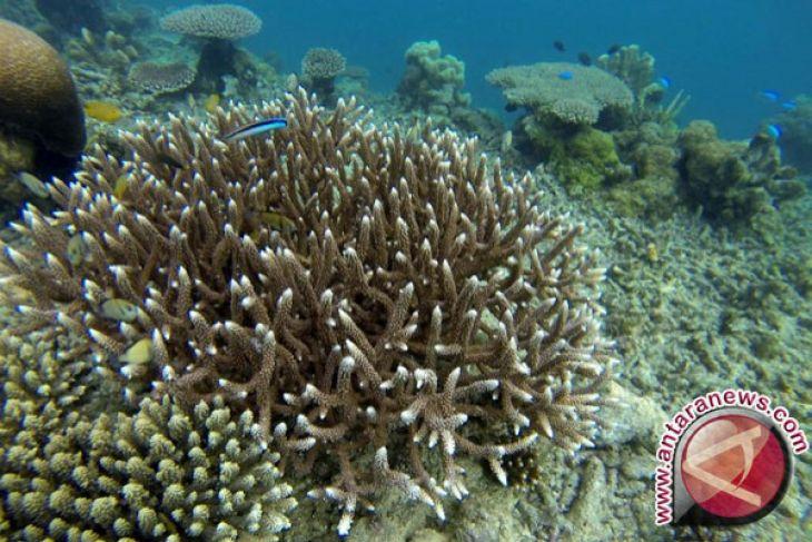 Peneliti IPB: Giant Sea Wall dan Implikasinya bagi Ekosistem Terumbu Karang Teluk Jakarta