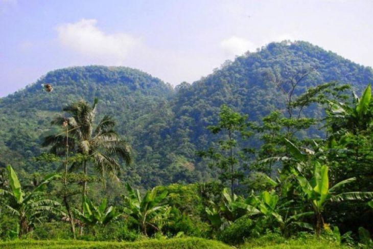 Keberadaan Satwa Dilindungi Di Gunung Sanggabuana Terancam