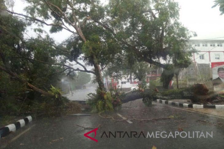 Ratusan pohon di Sukabumi rawan tumbang