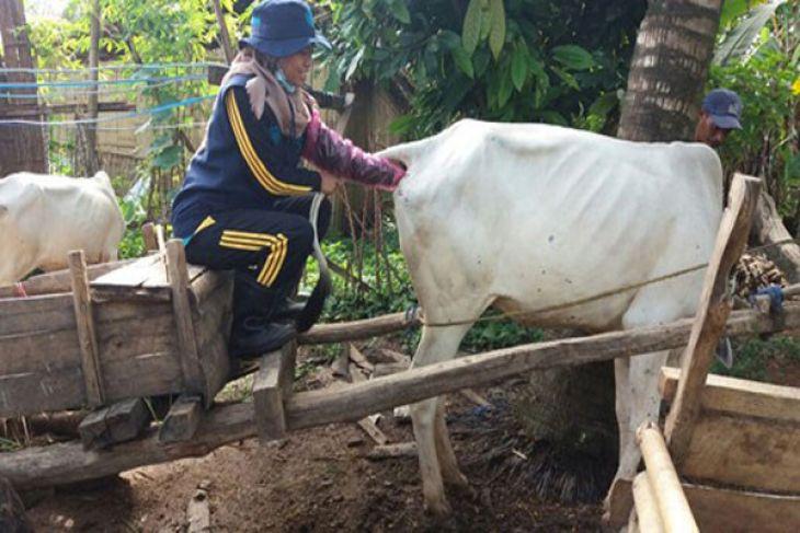 STPP Bogor bantu Upsus SIWAB Lampung Selatan