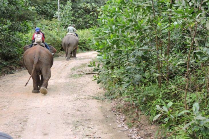 Ini dia pelatih gajah asal IPB