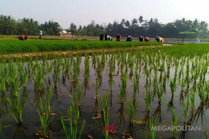 Purwakarta targetkan pengembangan 1.000 hektare sawah organik